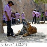 Тигр пьет (2009 год). Редакционное фото, фотограф Иванка Иванка / Фотобанк Лори