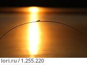 Купить «Маленькое насекомое на травинке на фоне заката», фото № 1255220, снято 30 июня 2009 г. (c) Валуйкин Сергей / Фотобанк Лори