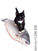 Купить «Мое. Маленький котенок и большая рыба.», фото № 1256928, снято 30 ноября 2009 г. (c) Светлана Чуйкова / Фотобанк Лори
