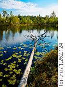 Купить «Лесной пейзаж», фото № 1262124, снято 27 мая 2018 г. (c) Кекяляйнен Андрей / Фотобанк Лори
