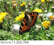 Купить «Бабочка», фото № 1262764, снято 25 августа 2007 г. (c) Землянникова Вероника / Фотобанк Лори