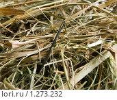 Купить «Иголка в стоге сена», фото № 1273232, снято 4 декабря 2009 г. (c) Овсяник Анна Владимировна / Фотобанк Лори