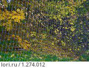 Купить «Деревья за сеткой», эксклюзивное фото № 1274012, снято 14 октября 2009 г. (c) Алёшина Оксана / Фотобанк Лори