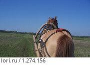 Прогулка в телеге. Стоковое фото, фотограф Игорь Крупин / Фотобанк Лори
