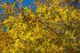 Желтые осенние листья, фото № 1277604, снято 3 декабря 2009 г. (c) Константин Бредников / Фотобанк Лори
