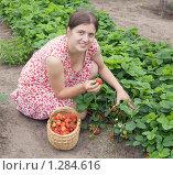 Купить «Молодая девушка собирает урожай клубники», фото № 1284616, снято 28 июня 2009 г. (c) Яков Филимонов / Фотобанк Лори