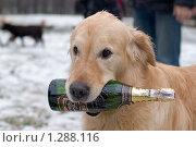 Купить «Советское шампанское. Собака держит в зубах бутылку.», фото № 1288116, снято 2 января 2007 г. (c) Максим Ковшов / Фотобанк Лори