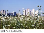 Луговые цветы за городом. Стоковое фото, фотограф Левончук Юрий / Фотобанк Лори