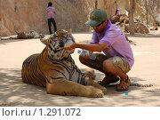 Довольный тигр, Тигровый монастырь в Тайланде (2009 год). Редакционное фото, фотограф Иванка Иванка / Фотобанк Лори