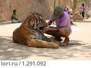 Тигр пьет воду, Тигровый монастырь в Тайланде (2009 год). Редакционное фото, фотограф Иванка Иванка / Фотобанк Лори