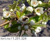Весна. Стоковое фото, фотограф Наталья Василенко / Фотобанк Лори