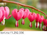 Разбитое сердце. Стоковое фото, фотограф Юрий Хотимченко / Фотобанк Лори