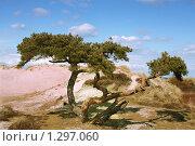 Одинокое дерево. Стоковое фото, фотограф Андрей / Фотобанк Лори