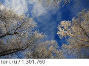 Купить «Небесный пейзаж с вершинами заснеженных деревьев», фото № 1301760, снято 13 декабря 2009 г. (c) Igor Lijashkov / Фотобанк Лори