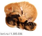 Купить «Два новорожденных котенка», фото № 1305036, снято 23 ноября 2009 г. (c) Евгений Дубинчук / Фотобанк Лори