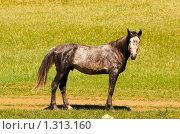 Конь. Стоковое фото, фотограф Храпова Марина / Фотобанк Лори
