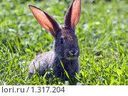 Кролик на траве. Стоковое фото, фотограф Дмитрий Милехин / Фотобанк Лори