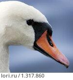 Купить «Портрет лебедя в профиль», фото № 1317860, снято 2 сентября 2009 г. (c) Владимир Борисов / Фотобанк Лори