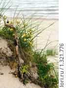 Купить «Цветы на пляже», фото № 1321776, снято 22 августа 2009 г. (c) Анна Лурье / Фотобанк Лори