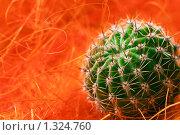 Купить «Детка кактуса», фото № 1324760, снято 26 декабря 2009 г. (c) Сергей Чистяков / Фотобанк Лори