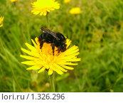Сбор нектара. Стоковое фото, фотограф Владимир Стефанов / Фотобанк Лори