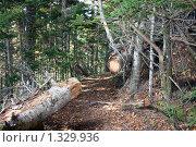 Купить «Распиленное дерево на лесной тропе», фото № 1329936, снято 28 октября 2007 г. (c) BELY / Фотобанк Лори