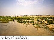 Болото в пустыне (2009 год). Стоковое фото, фотограф Тамара Нагиева / Фотобанк Лори