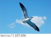Купить «Чайка в небе», фото № 1337656, снято 16 декабря 2009 г. (c) Мария Смирнова / Фотобанк Лори