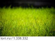 Зеленая трава без бликов на черном фоне. Стоковое фото, фотограф Алексей Хляпов / Фотобанк Лори
