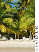 Купить «Множество лежаков на тропическом пляже», фото № 1341196, снято 16 декабря 2009 г. (c) Мария Смирнова / Фотобанк Лори