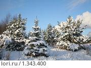 Купить «Лесная опушка. Зима», фото № 1343400, снято 4 января 2010 г. (c) Наталья Волкова / Фотобанк Лори