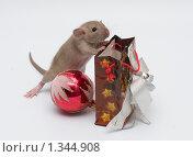 Крысенок с новогодними подарками. Стоковое фото, фотограф Голованова Светлана / Фотобанк Лори