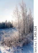 Зимний пейзаж. Стоковое фото, фотограф Алексей Калашников / Фотобанк Лори
