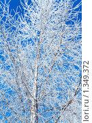 Купить «Зимний пейзаж», фото № 1349372, снято 3 января 2010 г. (c) Алексей Калашников / Фотобанк Лори