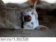 Купить «Спящая собака», фото № 1352520, снято 22 декабря 2009 г. (c) Морозова Татьяна / Фотобанк Лори