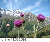 На высоте 2000 метров над уровнем моря. Стоковое фото, фотограф Дерюгина Елена / Фотобанк Лори