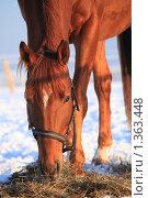 Купить «Рыжий конь», фото № 1363448, снято 11 января 2010 г. (c) Яна Королёва / Фотобанк Лори