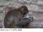 Обезьяна с игрушкой. Стоковое фото, фотограф Алексей Вялов / Фотобанк Лори