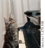 Купить «Кот пианист», фото № 1379108, снято 15 января 2010 г. (c) Бутинова Елена / Фотобанк Лори