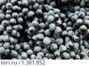 Спелый темно-синий виноград. Стоковое фото, фотограф Дмитрий Калиновский / Фотобанк Лори