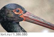Купить «Черный аист», фото № 1386080, снято 23 июля 2009 г. (c) Владимир Журавлев / Фотобанк Лори