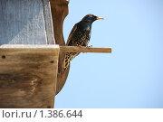 Купить «Скворец», фото № 1386644, снято 26 апреля 2008 г. (c) Наталья Щербань / Фотобанк Лори