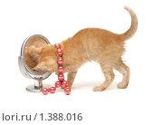 Купить «Рыжий котенок с красными бусами смотрит в зеркало», фото № 1388016, снято 16 января 2010 г. (c) Евгений Дубинчук / Фотобанк Лори