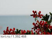 Морская фрейзия. Стоковое фото, фотограф Лотков Лель / Фотобанк Лори