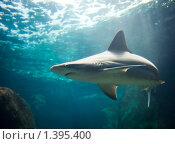 Купить «Акула», фото № 1395400, снято 18 августа 2009 г. (c) Andrejs Pidjass / Фотобанк Лори