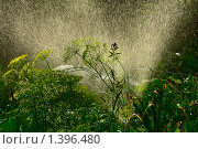 Вечерний моцион. Стоковое фото, фотограф Виктор Вуколов / Фотобанк Лори