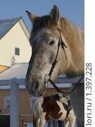 Купить «Морда лошади», фото № 1397228, снято 16 января 2010 г. (c) Яременко Екатерина / Фотобанк Лори