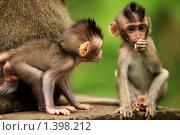 Купить «Детеныши обезьяны», фото № 1398212, снято 24 декабря 2009 г. (c) Морозова Татьяна / Фотобанк Лори