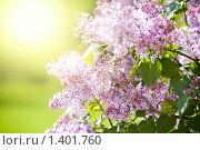 Купить «Весна», фото № 1401760, снято 27 мая 2009 г. (c) Вероника Галкина / Фотобанк Лори