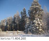 Купить «Зимний лес», фото № 1404260, снято 3 января 2010 г. (c) Юлия Козинец / Фотобанк Лори